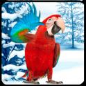 Amazing Talking Parrot