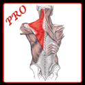 Anatomi Kas Sistemi PRO