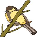 Chirpy Birdy