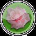 Roses live photo frame free