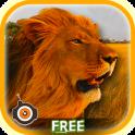Wild Lion Shooting