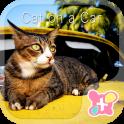 वॉलपेपर और आइकन Cat on a Car