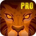 Lion Run +