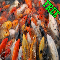 Cara Lengkap budidaya Ikan
