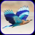 Bird 2wall