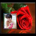 गुलाब के फूल फोटो HD फ्रेम