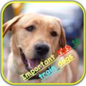 improve your dog training