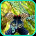 Butterflief Wallpaper