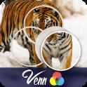 Venn Tigers