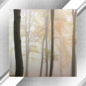 Fog Photo Frames