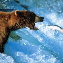 Bears Teddy Wallpapers Theme