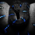 snakes live wallpaper