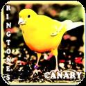 Canary Bird Ringtones