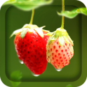 Red Strawberry Live Wallpaper