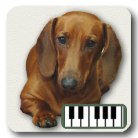 Piano of Dogs