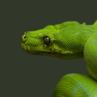 Snakes HD Themes