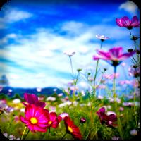 HD Color Flower Wallpaper
