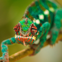 Reptiles and Frogs Wallpapers