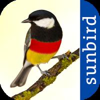 All Birds Germany - A Sunbird Field Guide