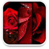 Rose Live Wallpapers