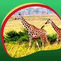 Giraffe Live Wallpapers