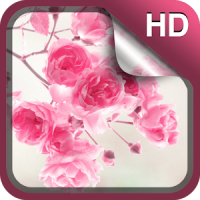Bonito Flores Rosa Fundo HD