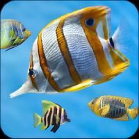 Fish Aquarium Live Wallpaper 3D Screensaver Free