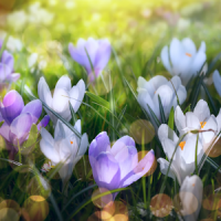 Spring Landscapes Wallpaper
