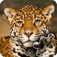 Animals Photo Jigsaw Puzzle for kids & toddlers