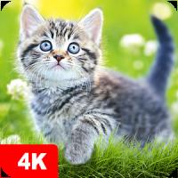 Cat Wallpapers & Kitten Backgrounds