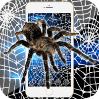 Spider Theme Black White Cobweb Full Of Cracks