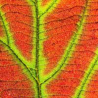 Slide Puzzle Beautiful Nature