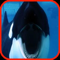 Orca Wallpaper