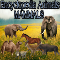 Animal Encyclopedia: Mammals