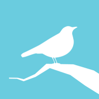 Animated Birds Free
