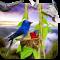 3D Birds Live Wallpaper HD