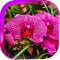 Orchids Magic live wallpaper