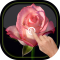 Magic Touch - Rose LWP