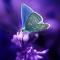 Butterflies Live Wallpaper Moving Butterfly