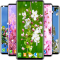 Cherry Blossom Live Wallpaper Spring Wallpaper