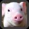 Little Pig wallpaper
